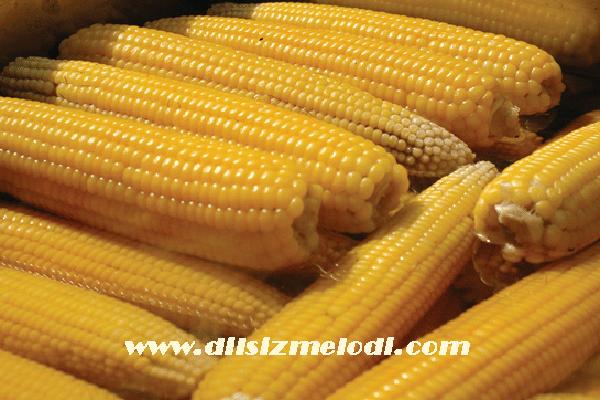 mısır pişirme önerisi, mısır nasıl çabuk pişer, mısırın çabuk pişmesi