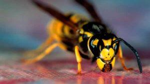 eşek arısı ilaçlama, eşek arısı ilaçlaması yapımı, eşek arası nasıl ilaçlanır